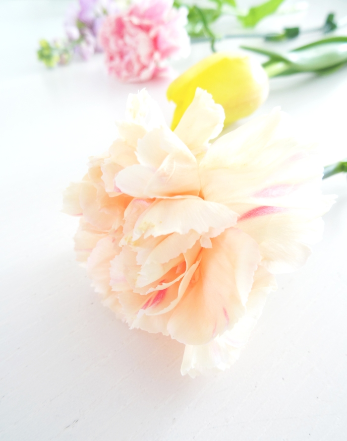 blog bloemen close up1